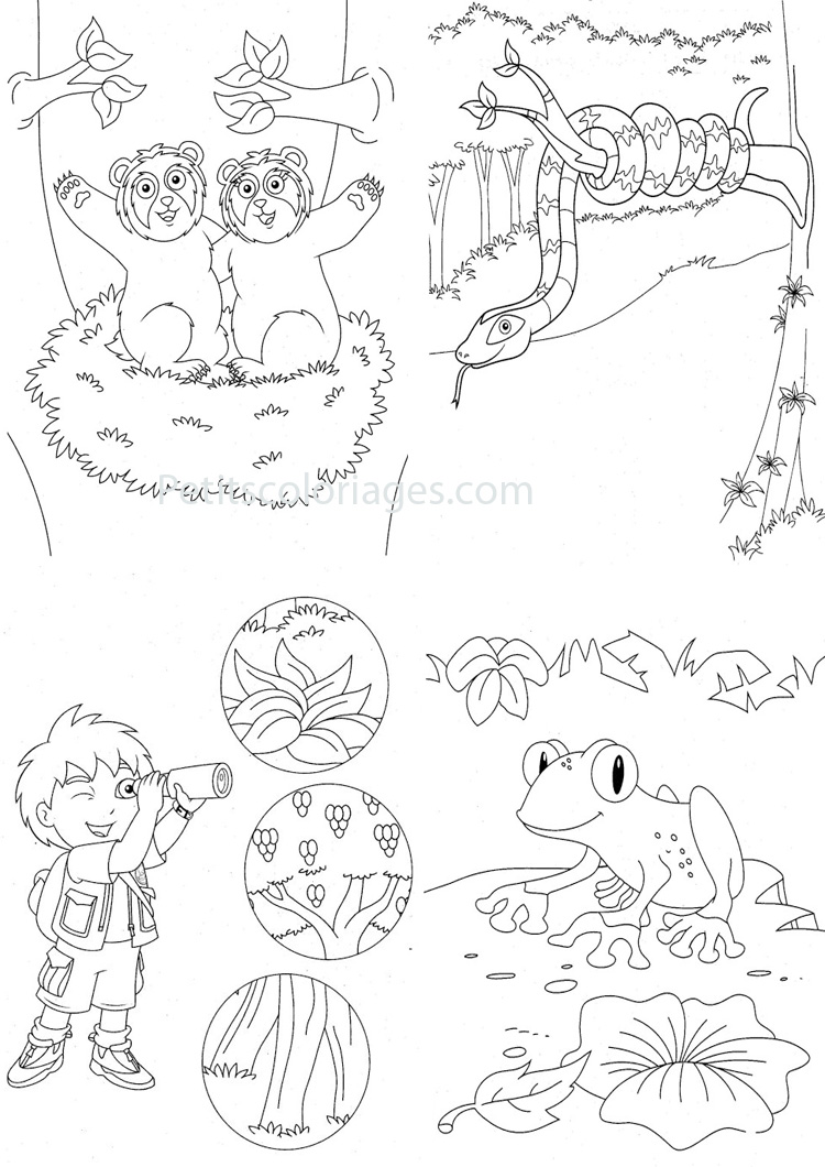 Petits coloriages Diego grenouille, serpent, nid